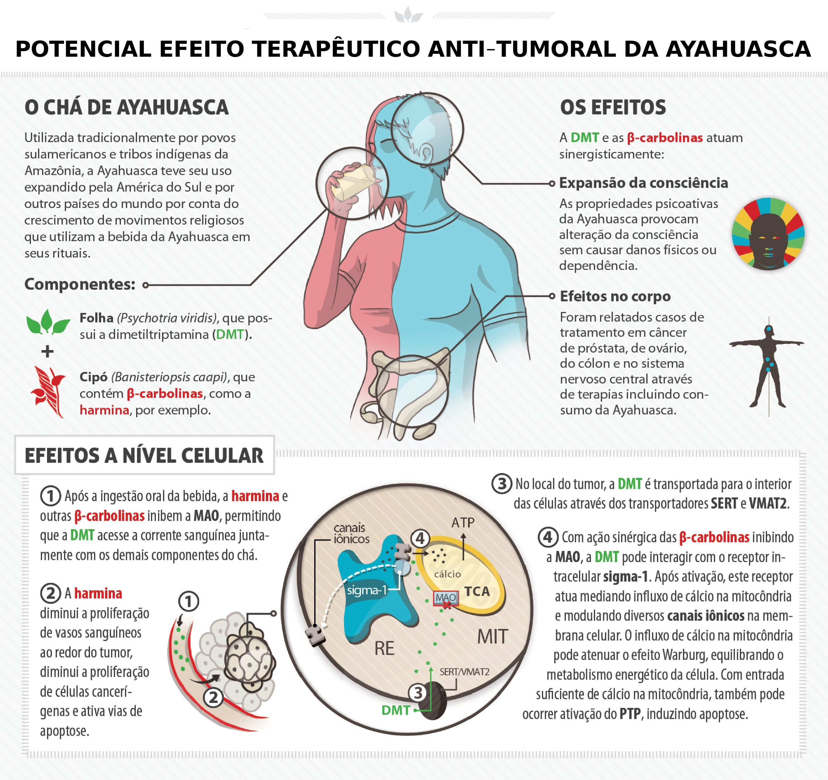 Ayahuasca e o tratamento do cancer