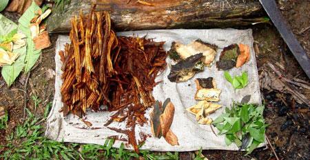 Alimentos que Devem Ser Evitados – Ayahuasca